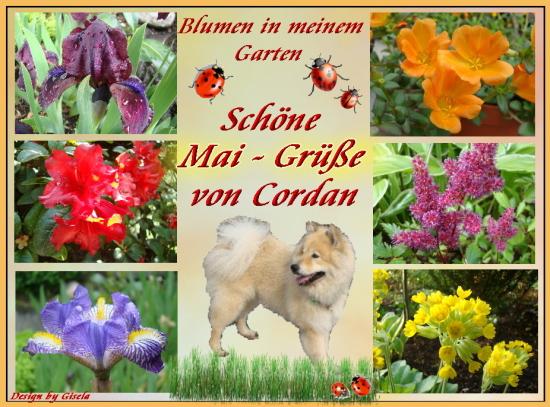 An den Beitrag angehängtes Bild: http://cordan-vom-fliederberg.beepworld.de/files/greimmai.jpg